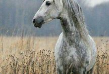Equestrian / All things horse