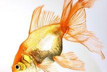 Рыбки, морской мир, аквариумы
