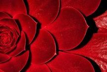 Red ~ Piros