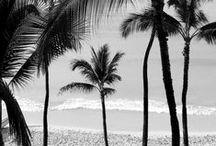 B E A C H  L I F E / About dreaming beach life.