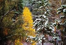 Otoño-Invierno color