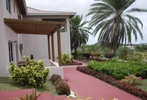 Landscaping Ideas / How to Liven Up Your Home With Over 7250 Breathtaking Landscaping Designs WITHOUT Hiring Costly Professional Landscape Designers... / by Bitz Hall