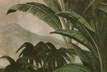 Jungle Vintage & Wallpaper
