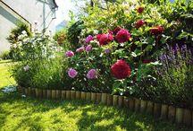 Garden | Zahrada / Garden inspiration. Gardening, trees, flowers.