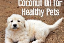 Dog health / by Sue Clemons