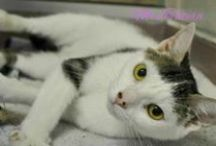 Adopted Cats / Check out the great cats that have found Furever homes through the Hamilton/Burlington SPCA www.hbspca.com