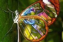 Natura / Frumusetea naturii