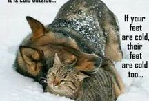 Pet care in Cold Weather / Tips to keep your four legged friends healthy and safe during winter.