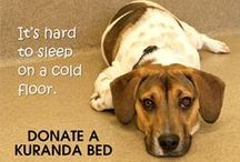 Items Needed for Donation / Check out our wish list for items we regularly need at the shelter. Donations of new items are preferred but we do accept gently used items. Cat and dog beds can be ordered online from the links below and sent directly to the HBSPCA. Other items can be dropped off at the shelter during normal business hours.