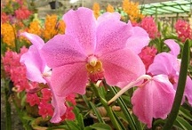Plant Vendors / Garden plant nurseries and retailers in Malaysia.