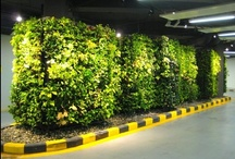 Green Walls / Makes the air much more breathable, yay!