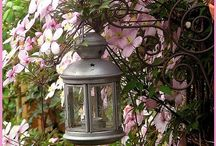 Gardens / by sam ingle