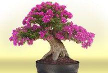 Комнатные растения и цветы / Комнатные цветы и растения фото. Уход за комнатными цветами. Биопрепараты для растений, гидрогель, уход и выращивание. Садовые цветы и растения, статьи.