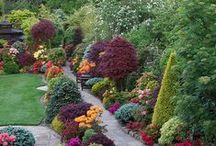 Ideias para o Jardim
