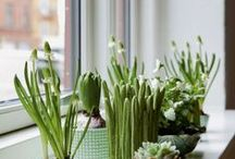 Indoor garden | Plants | Herbs / Indoor plants, succulents, herbs, flowers and gardening.