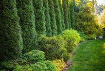 for beautiful gardens