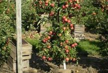 Vegetable and Fruit Gardening