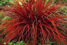 decorative shrubs and grasses