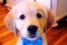 Pups! / At GiftSniffer.com, we love pups! These are some of our faves from browsing around Pinterest.