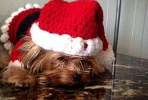 Dog Santas / Who dresses their best friend up for the holidays?
