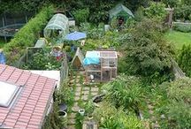 Permaculture & Food Forests