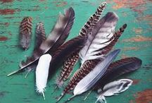 "Feather / ""It is not only fine feathers that make fine birds."" ~Aesop / by Toni Habens"