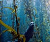 Animals - Mammals - Other Marine Mammals / Seals, Manatees, etc ... you know exactly what I mean.