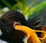 Animals - Invertebrates - Freshwater inverts
