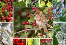 Gardening for wildlife in the UK / Plants to attract bees, butterflies, moths and birds to your British garden.
