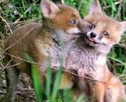 Hunting & Wildlife Persecution in the UK