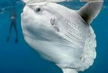 Animals - Fish - marine / Temperate and tropical saltwater fish
