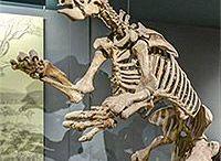 Archaeology and Palaeontology