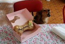 Compleanno Daisy / Il compleanno della piccola abbaiatrice seriale.