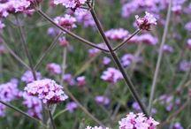 Bumble Bee Friendly Garden