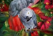 Parrot Art / A collection of parrot art from the Beauty In Nature collection by Carol Cavalaris.