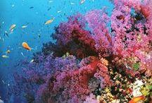 Colours / Il mondo è bello perché è colorato...