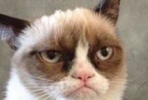 Grumpy cat / SHE is a grumpy cat