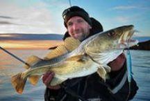 Angeln in Norwegen / Große Fische, herrliche Landschaften sowie eine hervorragende Fischerei im Süß- und Salzwasser machen Norwegen zu einem besonderen Ziel für Angler.