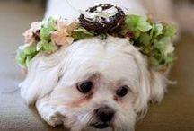 Wedding Trends We Love!