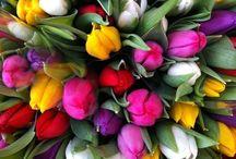 Flores  / Flores do Mundo / by Aline Troviscal