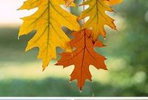 herfst / Herfst