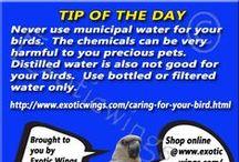Pet Bird Tips / Help in keeping pet birds safe!