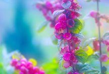 Birds, Blooms & Butterflies