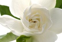 Plants and Gardening / Plants and Gardening / by Carol Newton