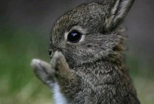 All Creatures of our God and King / So much cute!