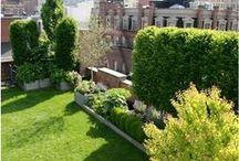 Urban Gardens / Urban Farms