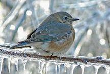 Ptaki w obiektywie / Birds, foto,