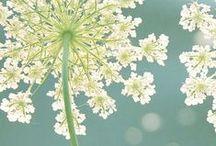 ☆ Seizoenen en natuur / De natuur leeft ons práchtig voor. In overgave.. Zijn. De seizoenen: een inspiratiebron van jewelste.. The circle of life en daarbinnen de processen van ontkiemen, groeien, bloeien, loslaten, verstillen en opnieuw zaaien. Te gebruiken als ondersteunende metafoor in je eigen ontwikkeling en je eigen leven.  LIV! organiseert ieder seizoen een inspiratiemiddag rond het seizoen: LenteLIV!, ZomerLIV!, HerfstLIV! en WinterLIV! Je bent er hartelijk welkom. www.livlevenscoaching.nl
