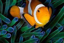 Sea Life / Whats in the Sea / by Marilynn Heath