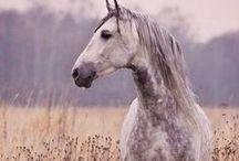 ~Horses~ / ~Beautiful horses~